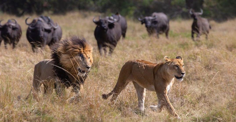 Masai-Mara.-@michael.laubscherInstagram